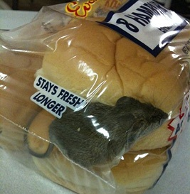 freshness-fail-mouse-buns.jpg.scaled1000.jpg